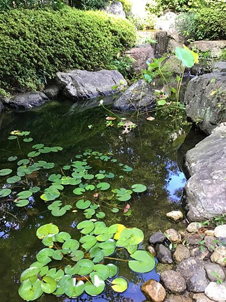 カフェ・ミラーの日本庭園の池