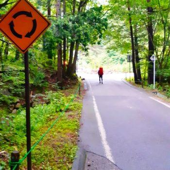 森の中の一本道、手前にラウンドアバウト交差点の標識