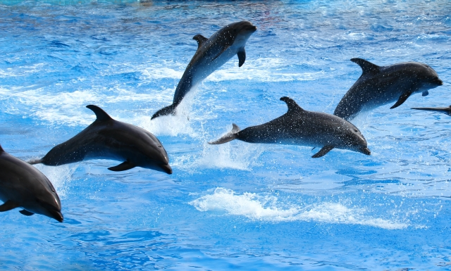 水面をジャンプする5棟のイルカたち
